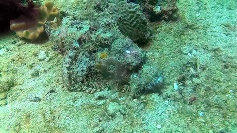 Shocker Video underwater Marinelife conservation