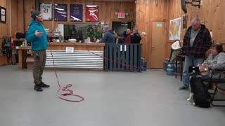Dog goes CRAZY on leash