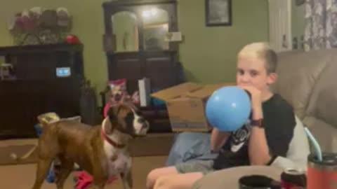 Cooper plays with Bentley