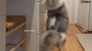 Funny Dancing Cat meme 😹