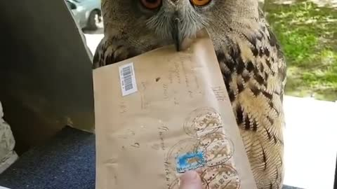 Hedwig is real? 😅📬