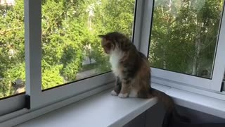This cat is very fond of watching passing cars ❤️