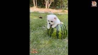 I Love Puppy!
