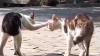 Cats are preparing to enter the theater