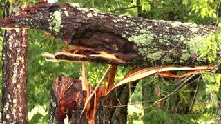 06-13-21 Scott County, KY Flooding & Trees Down