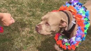 Animal Shelter Celebrates Dog Going Home After 500 Days