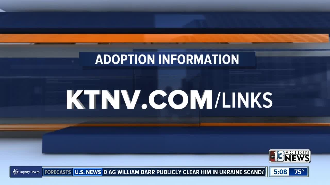 Clark County launches new effort to help kids get adopted