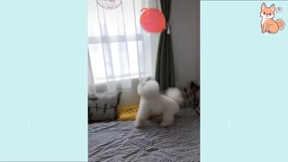 Cute Puppies Cute Funny Cute Buddy