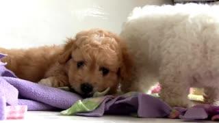 perros: Características, cuidados y origen