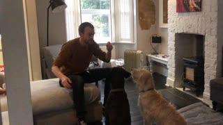 Bewildered dog amazed by magic trick