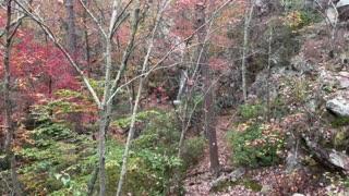 Peavine Falls @ Oak Mountain State Park