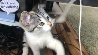 Kitten being Playful