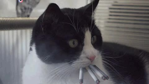 It never smoked