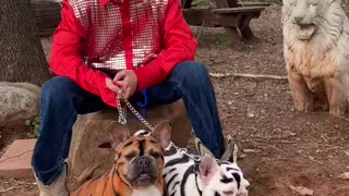 Kids Role Playing as the Tiger King with Frenchies