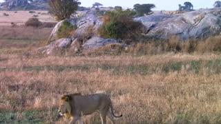 Compilation Of Wild Live Animals Video