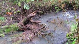 Oregon Rain Storm Destroys Pig Shelter and Downs Tree
