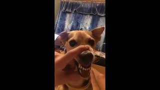 Cachorro lalalala kkkkk