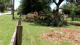 Crazy tree felling over power lines