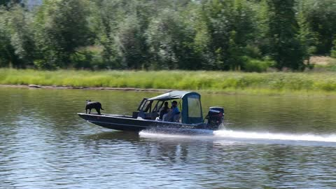 """A Dog Was Enjoying on a Boat Passing """"LOVE ALASKA"""" Sign along with the Chena River in Fairbanks, Alaska"""