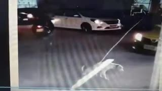 Dog acting