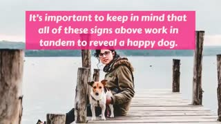 Here's what you need to know about your dog    Happy or Sad Dog