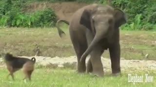 An Elephant Is Facing A Dog Inastreng Eway