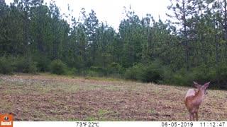 Trail Camera 7