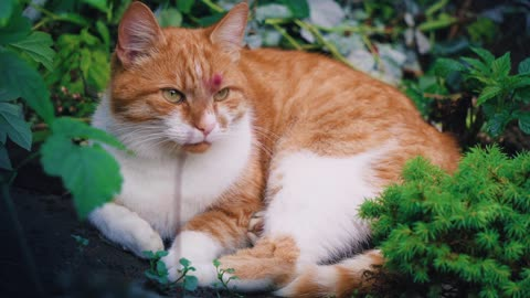 Cat cute and nature animal