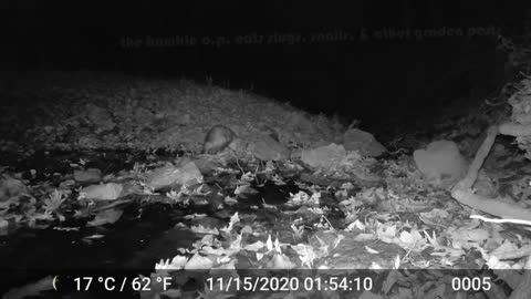 Scofflaw Nightlife presents: the Humble Opossum: a three-part mini-series (part 2)