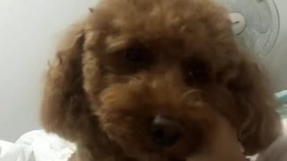 Cute Dog Loves Massage In Bed