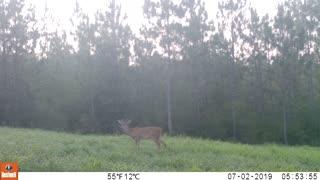Trail Camera 1