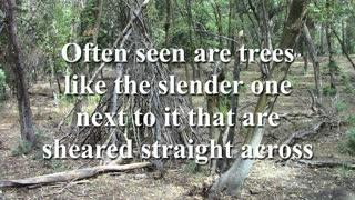 Strange I Have Found in my Hikes near Sasquatch Structures