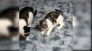 Cute and Funny Baby Cat Compilation Videos