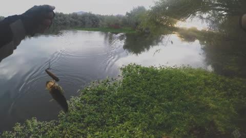 Popper fishing!!