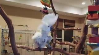 Cute parrot video