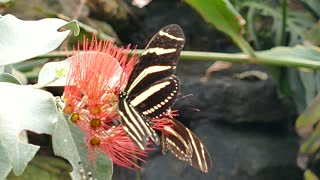 Butterflies Insects feeds On Flower nectar