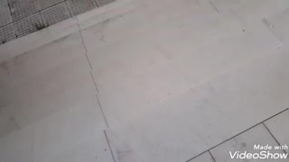 Dog - kitten funny meeting