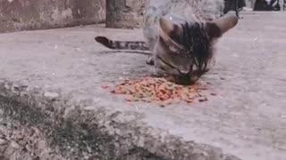 Comida para animales en Bucaramanga