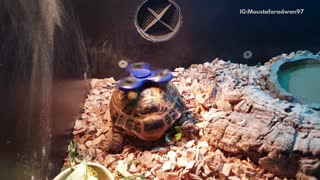 Turtle with fidget spinner spinning on shell