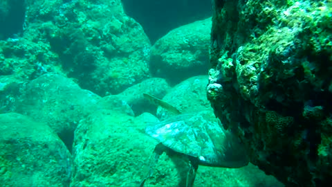 Green Sea Turtles and More