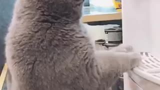Funny cats dogs
