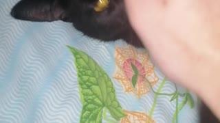OMG!!! My cat eat me! 🙀