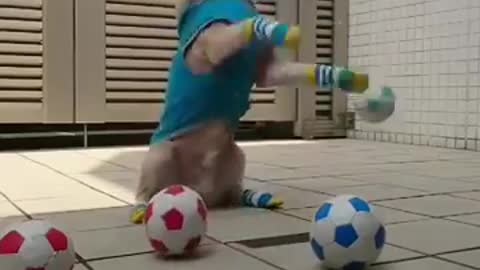 My dog catching the ball and doing tricks