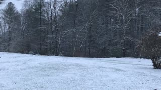 The First Snowfall of 2019 at the Henry Hollow