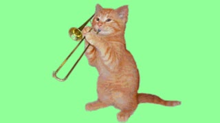 cute cat videos