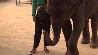 Elephant massage in Thailand