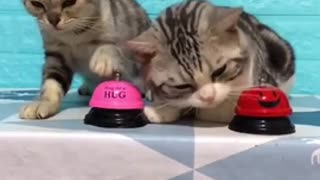 Cat Trains Hooman with Bell for Food
