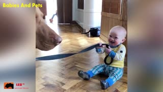 funny baby and family dog play together