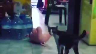 Killer Cat Wrestling Move