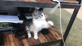 little funny cat 1
